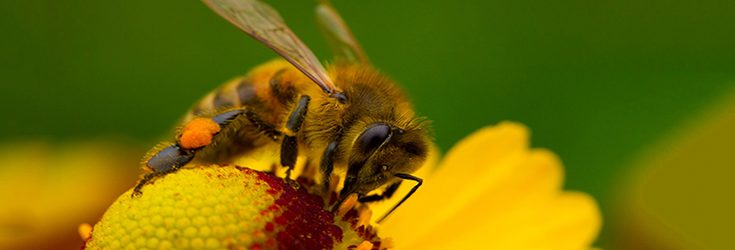 Pesticide Manufacturers' Tests Show Their Products Threaten Bees