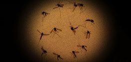 dead mosquitoes