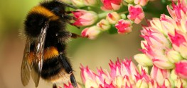 100+ Businesses Urge Obama to Suspend Bee-Killing Pesticides