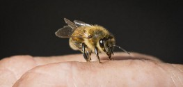 EPA Approval of Bee-Killing Neonics Struck Down by Court