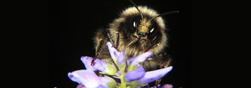 2 Studies Link Neonic Pesticides to Bee Deaths ... Sort Of