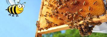 USDA Report: Bee Populations FINALLY Rising After Years of Decline