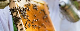 Pest-Control Giant to Phase out Use of Bee-Killing Chemicals by 2021