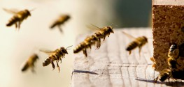 "Beekeeper Survey: ""We've Lost Almost Half Our Bee Colonies in the Past Year"""