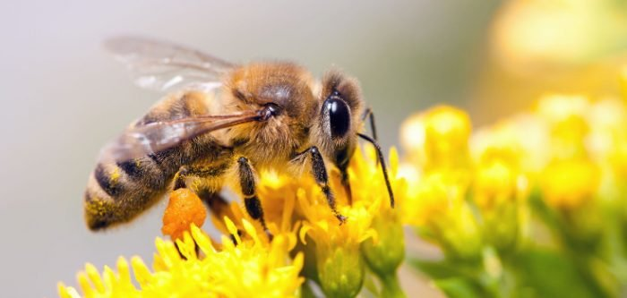 Portland Bans Insecticide in Light of Massive Bee Deaths