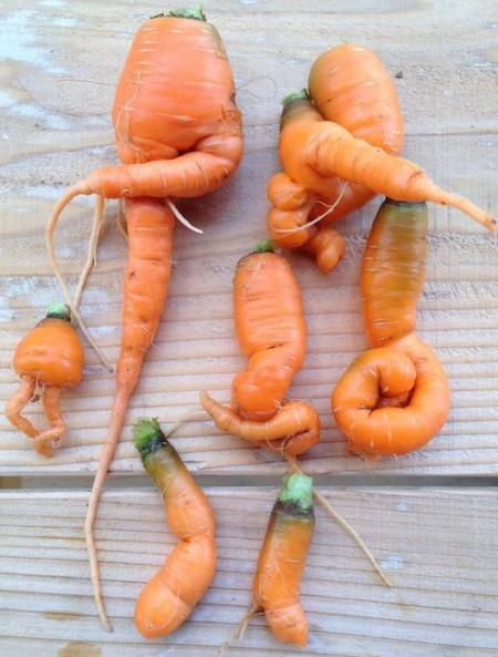 japan_radiation_carrots_mutate_crop