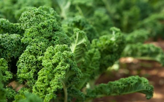 Kale: A Green Nutritional Powerhouse Everyone Should Eat