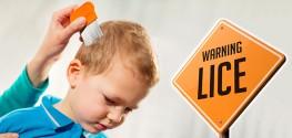 head lice resistant