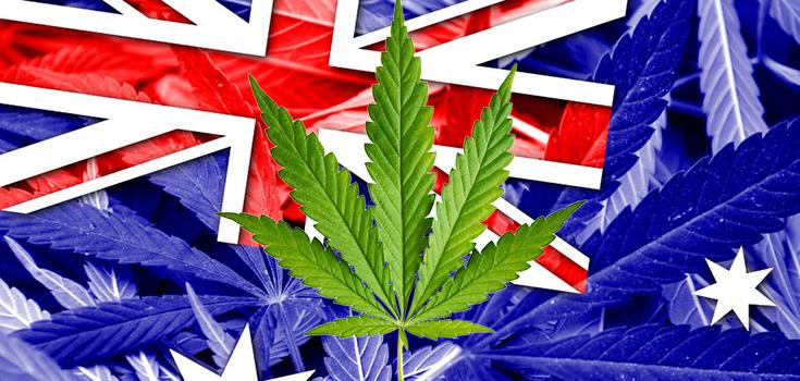 marijuana australia 735-350 2