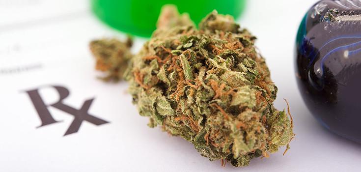 marijuana-bud-med-735-350