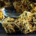 marijuana buds 735x350