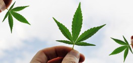 Here's Why it's Time to Reschedule Marijuana