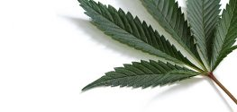 Lawmakers Introduce Bill Package to Treat Marijuana Like Alcohol