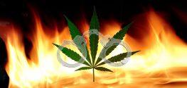 Arrests for Marijuana Outnumber Arrest for Violent Crime