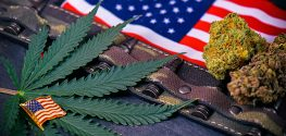 VA Head Comes out in Support of Marijuana for Vets with PTSD