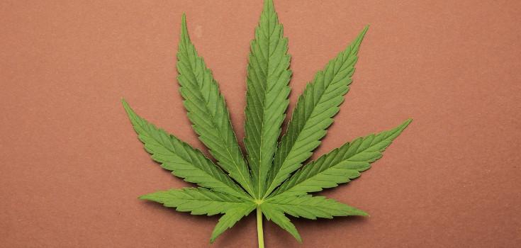 marijuana_cannabis_hemp_735_350