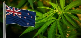 marijuana new zealnd