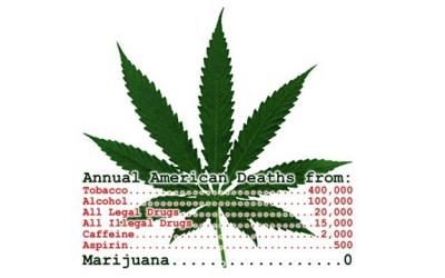 marijuana deaths