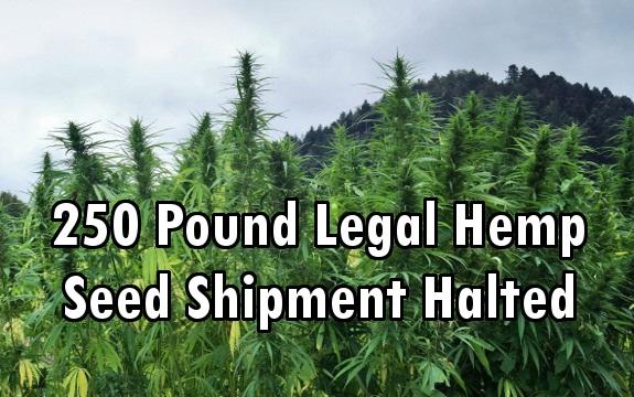 marijuana shipment