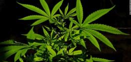 6 States That may be Next to Legalize Marijuana
