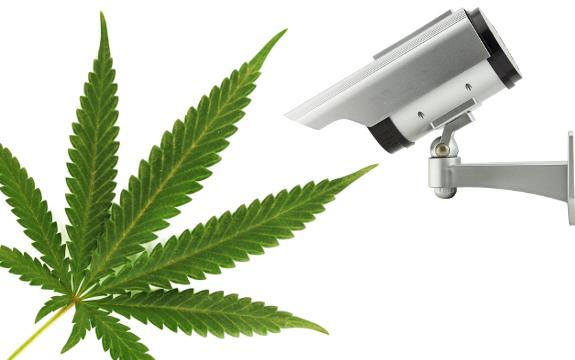marijuana spy