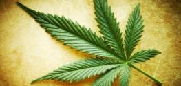 Federal Govt Admits Marijuana Kills Brain Tumors, But You Still Can't Have It