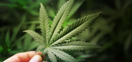 'Gold Standard' Survey: Majority of Americans Want Marijuana Legalized
