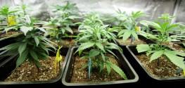 US Virgin Islands Decriminalizes Cannabis Possession