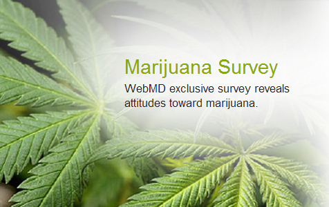 marijuana survey