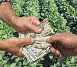 money crops farmer square 1800