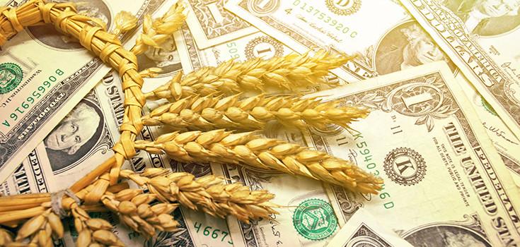 money-crops-wheat-735-350