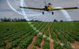 Special Report: We Are Winning the Fight Against Monsanto & GMOs