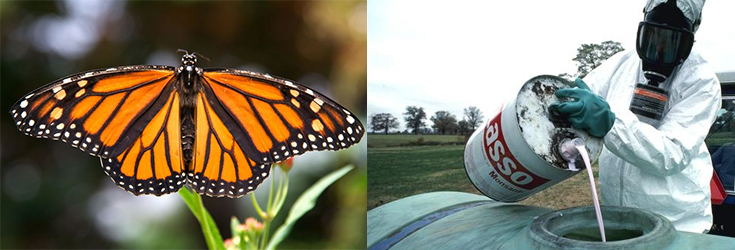 monsanto-monarch-butterfly-roundup