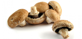 Medicinal Mushrooms Proven to Fight the Human Papilloma Virus