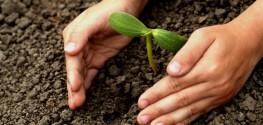 5 Expert Tips for Starting Your Own Organic Seedlings