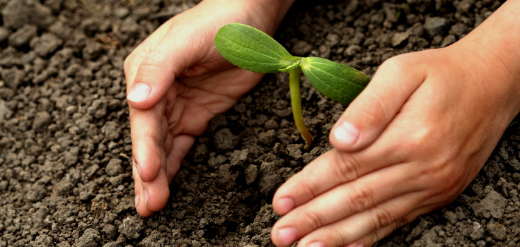 nature_gardening_seedlings_735_350_edit