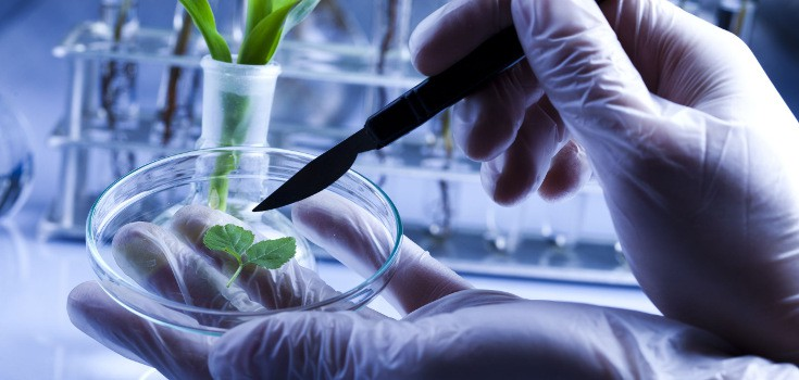 gmo testing Epa's regulation of biotechnology for use in pest toxicity testing will be conducted with a range of doses and concentrations 10 to 100 times higher than.