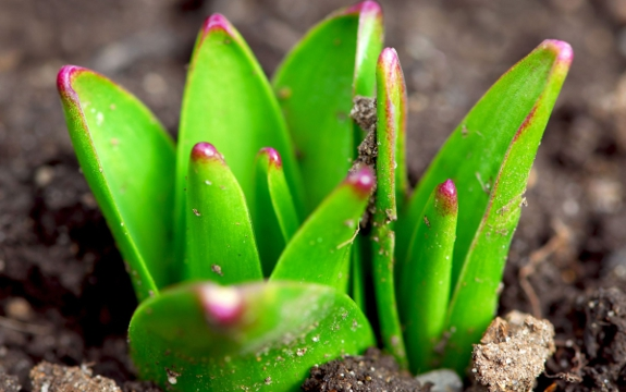 Start Sprouting to Receive up to 900% More Nutrition from Your Food