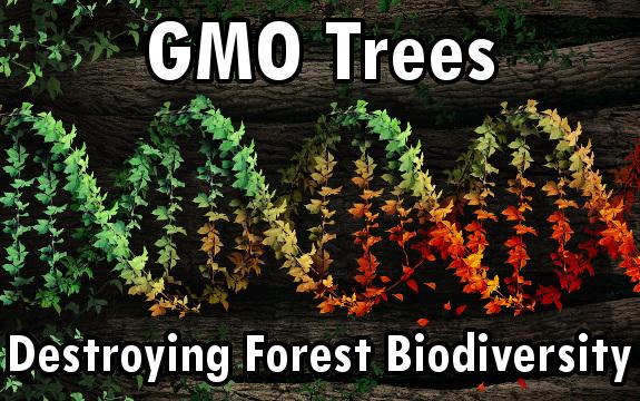 gmo trees