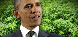 Obama Hints at Federal Marijuana Reform