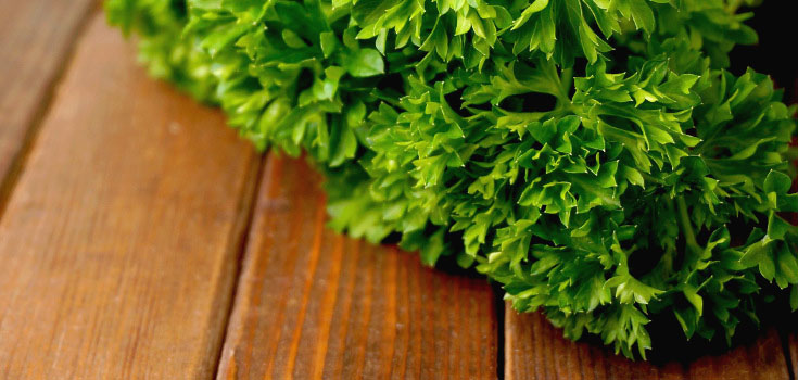 parsley-herb-food-735-350