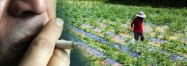 Pesticides as Bad for Kids' Lungs as Cigarettes, Says New Study