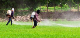 "EPA Used Biased Studies to Deem Glyphosate ""Safe"""