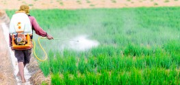 36 Different Pesticides Found in Hawaiian Child's Hair Sample