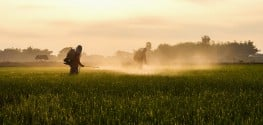 Global Glyphosate Herbicide Market IS Driven by Genetically Modified Crops