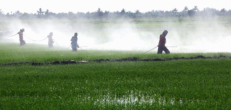 pesticides-paddy-levels-735-350