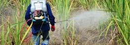 Sri Lanka's Newly Elected President Bans Glyphosate Effective Immediately