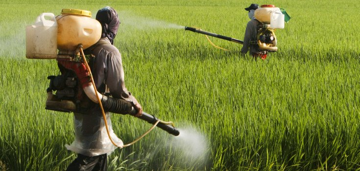 pesticides_field_guys_735_350