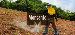 Monsanto to Spend $1 Billion on New Herbicide Following Roundup Cancer Link