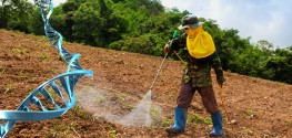 New Findings: Over 4000 'Gene Probes' Altered with Low-Dose Roundup Exposure